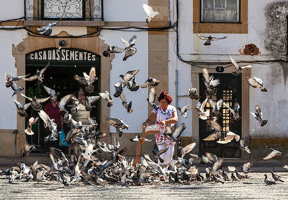 Woman feeding pigeons in Tomar.